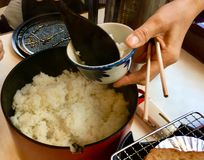 Japanese white rice royalty free stock images