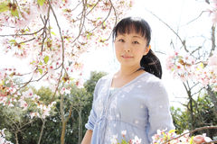 Japanese woman with cherry blossom. Portrait of young japanese woman with cherry blossom Royalty Free Stock Photo