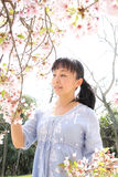 Japanese woman with cherry blossom. Portrait of young japanese woman with cherry blossom Stock Image