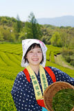 Japanese woman harvesting tea leaves. KAGAWA, JAPAN - APRIL 24, 2017: Young japanese woman with traditional clothing kimono harvesting green tea leaves on Royalty Free Stock Photos