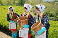 Japanese woman harvesting tea leaves. KAGAWA, JAPAN - APRIL 24, 2017: Young japanese women with traditional clothing kimono harvesting green tea leaves on Stock Photo
