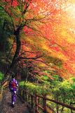 Japanese woman walking with traditional kimono in autumn Royalty Free Stock Photography