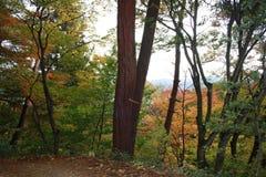 Japanese woodland Stock Photos
