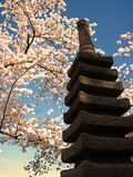 Japanese Yokohama Statue and Cherry Blossoms 077 Stock Images