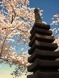 Japanese Yokohama Statue and Cherry Blossoms 077 Stock Images