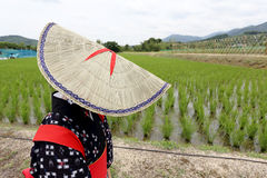Japanese young girl planting rice Stock Images