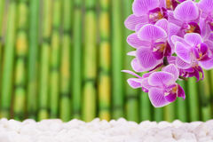 Japanese zen garden with orchid flower and bamboo Royalty Free Stock Photo