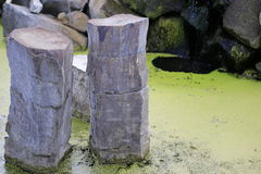 Japanese zen water garden pond Stock Image