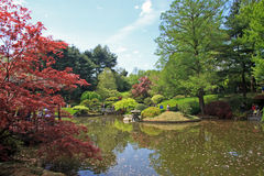 Japaneses garden. In Botanic garden Royalty Free Stock Photo