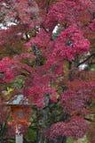 Japanische Ahornblätter im Herbst, Kyoto, Japan lizenzfreies stockfoto