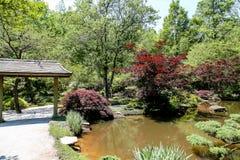 Japanische Ahorne und Garten Stockbilder