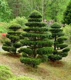Japanische Bäume stockfotografie