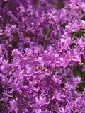 Japanische Blume stockfotos