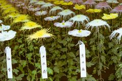 Japanische Blumen in nationalem Garten Shinjuku Gyoen, Tokyo, Japan Lizenzfreie Stockfotos