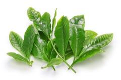 Japanische Errötenblätter des grünen Tees zuerst lizenzfreie stockfotografie