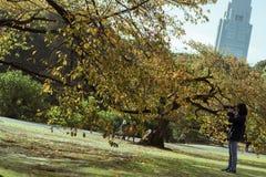 Japanische Frau, die einen Baum in einem Park in Tokyo, Japan fotografiert Stockfotos