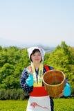 Japanische Frau, die Teeblätter erntet Stockfotografie