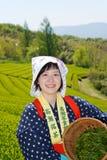 Japanische Frau, die Teeblätter erntet Lizenzfreie Stockfotos