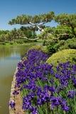 Japanische Gärten Stockfoto
