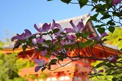 Japanische garden〠 Kornelkirsche Lizenzfreies Stockfoto