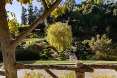 Japanische Garten-Ansicht lizenzfreies stockbild