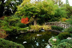 Japanische Garten-Brücke Stockfotos