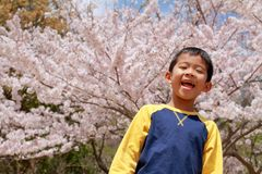 Japanische Jungen- und Kirschblüten Lizenzfreie Stockfotos