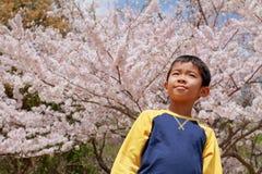 Japanische Jungen- und Kirschblüten Lizenzfreies Stockfoto