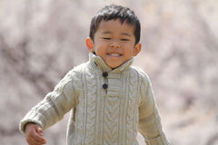 Japanische Jungen- und Kirschblüten Stockbilder