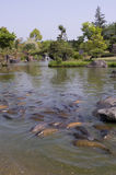 Japanische Karpfen Stockbilder