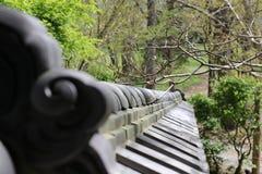 Japanische Kiefer-Nebel-Garten-Wand Stockbild