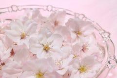 Japanische Kirschblütenblumen in der rosa Stimmung Lizenzfreie Stockbilder