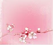 Japanische Kirschblüten Stockbild