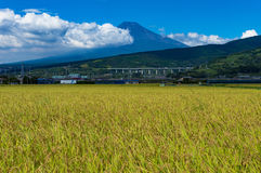 Japanische Landschaftslandschaft des Reisfeldes mit Mt Fuji Lizenzfreies Stockfoto