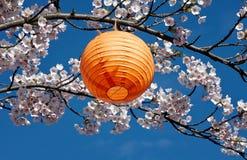 Japanische Laterne im Kirschbaum Lizenzfreie Stockfotos