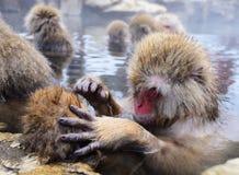 Japanische Makaken Lizenzfreies Stockfoto