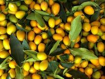Japanische Orange, Fortunella, kinkan Natürliche Früchte, natürliche Vitamine Ein lebendes Fragment von einem Obst- und Gemüse Sp lizenzfreies stockbild