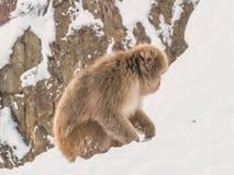 Japanische Schneeaffe-Schneewintersaison in der heißen Quelle Onsaen, Tiernaturgeschöpf Jigokudan-Park der wild lebenden Tiere, N Stockfotografie