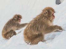 Japanische Schneeaffe-Schneewintersaison in der heißen Quelle Onsaen, Tiernaturgeschöpf Jigokudan-Park der wild lebenden Tiere, N Lizenzfreies Stockbild