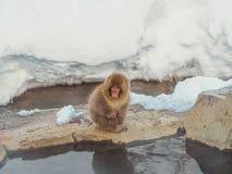 Japanische Schneeaffe-Schneewintersaison in der heißen Quelle Onsaen, Tiernaturgeschöpf Jigokudan-Park der wild lebenden Tiere, N Stockfoto