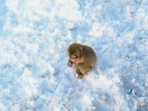 Japanische Schneeaffe-Schneewintersaison in der heißen Quelle Onsaen, Tiernaturgeschöpf Jigokudan-Park der wild lebenden Tiere, N Lizenzfreies Stockfoto