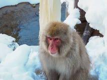 Japanische Schneeaffe-Schneewintersaison in der heißen Quelle Onsaen, Tiernaturgeschöpf Jigokudan-Park der wild lebenden Tiere, N Stockbilder