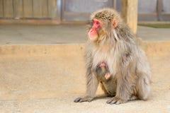 Japanische streichelnde Makakenmutter Lizenzfreie Stockbilder