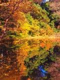 Japanische Teichreflexionen mit Schatten von Grüns, von Gelbs und von Orangen Lizenzfreie Stockfotografie