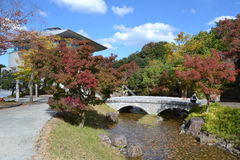 Japanischer Ahorn Stockfoto