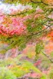 Japanischer Ahorn in der Herbstsaison für Hintergrund, See Kinrinko Yu Lizenzfreie Stockfotografie