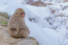 Japanischer badender Affe Lizenzfreies Stockfoto