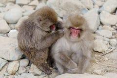 Japanischer badender Affe Stockfotografie