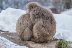 Japanischer badender Affe Lizenzfreie Stockfotografie