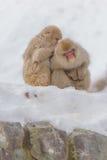 Japanischer badender Affe Lizenzfreie Stockbilder